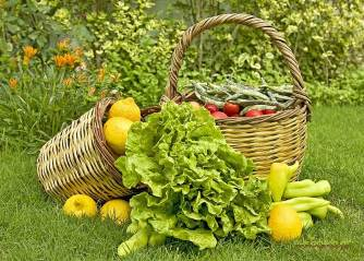 """Αποτέλεσμα εικόνας για Τροποποίηση του Μέτρου 11 """"Βιολογικές Καλλιέργειες"""""""